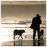 Man Walking Dogs on a Beach